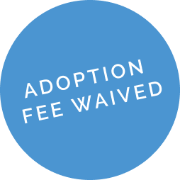 Adoption fee waived